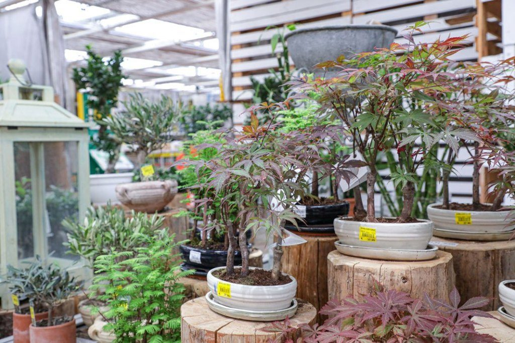 Zocca Floricoltura Giardinia